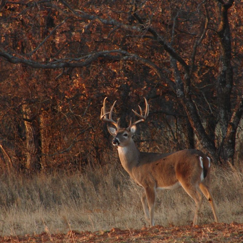10 New Deer Hunting Desktop Wallpaper FULL HD 1920×1080 For PC Desktop 2018 free download image result for best buck pictures for cover photos facebook 800x800