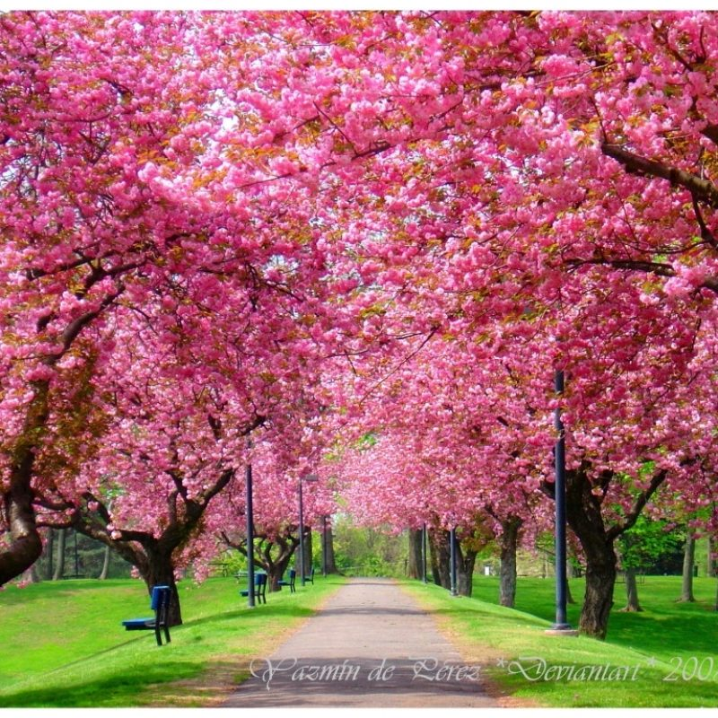 10 Latest Free Spring Screensavers And Wallpaper FULL HD 1920×1080 For PC Background 2018 free download image result for free spring screensavers free screensavers 800x800