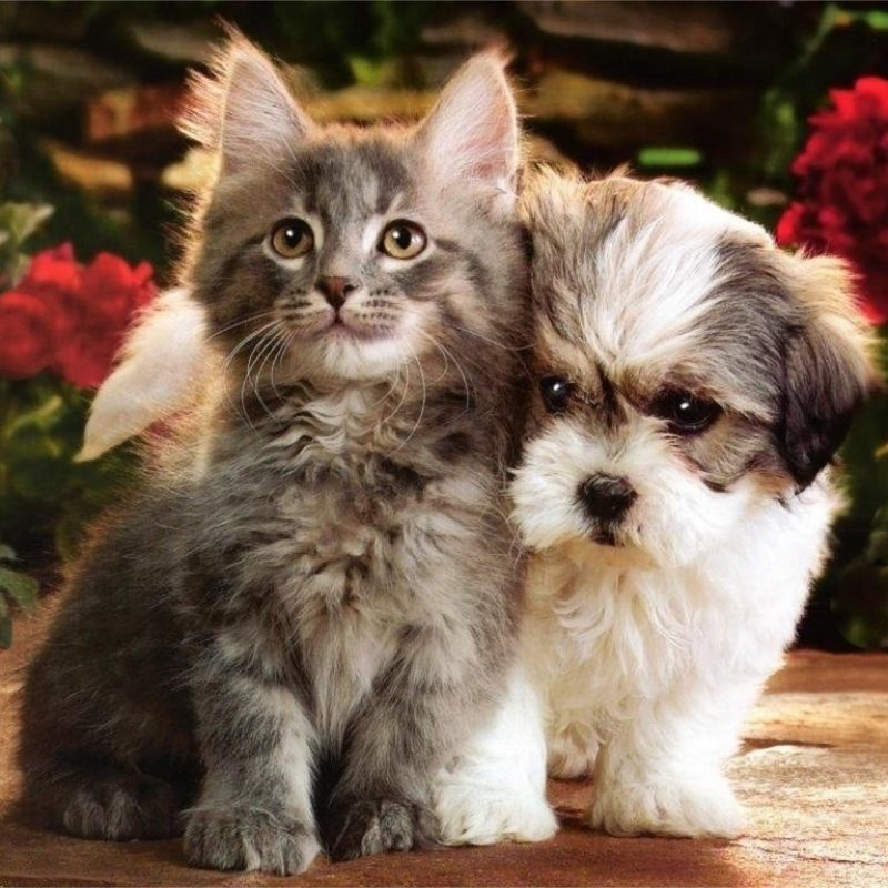 10 Latest Cute Puppy And Kitten Pics FULL HD 1920×1080 For PC Desktop 2020 free download image result for pictures of puppies and kittens animals babies 800x800