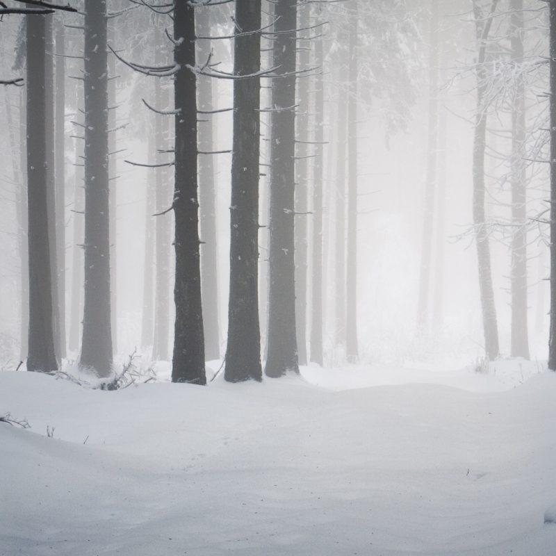 10 Best Winter Forest Wallpaper Hd FULL HD 1080p For PC Background 2018 free download image wallpaper hd neige winter 2012031318 16 album neige winter 800x800