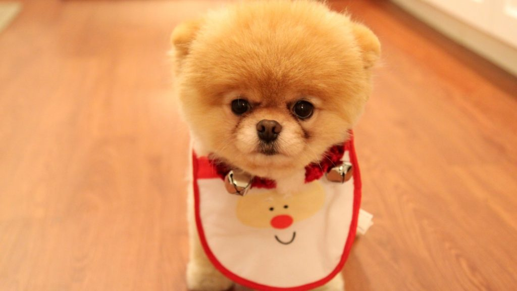 10 New Cute Puppy Christmas Pictures FULL HD 1920×1080 For PC Background 2020 free download images about dogs on pinterest teacup pomeranian pit bull 1920 1024x576