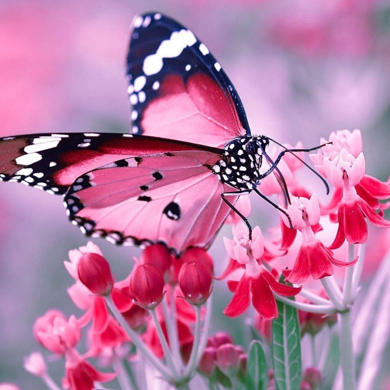 10 Latest Flowers With Butterfly Wallpaper Hd FULL HD 1080p For PC Desktop 2018 free download images flower butterfly wallpaper media file pixelstalk 800x800