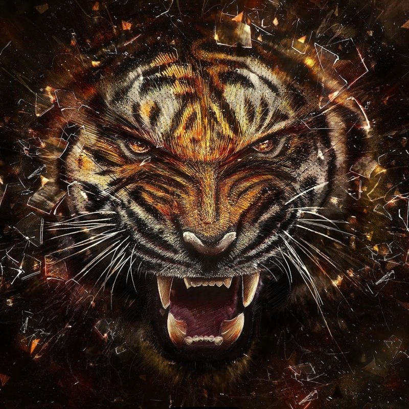 10 Latest Cool Pics Of Tigers FULL HD 1080p For PC Desktop 2020 free download images for cool backgrounds of tigers tigers 3 pinterest 800x800