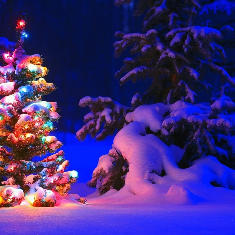 10 Best Christmas Tree Snow Wallpaper Hd FULL HD 1920×1080 For PC Background 2021 free download images of christmas trees in the snow home design ideas collection 800x800