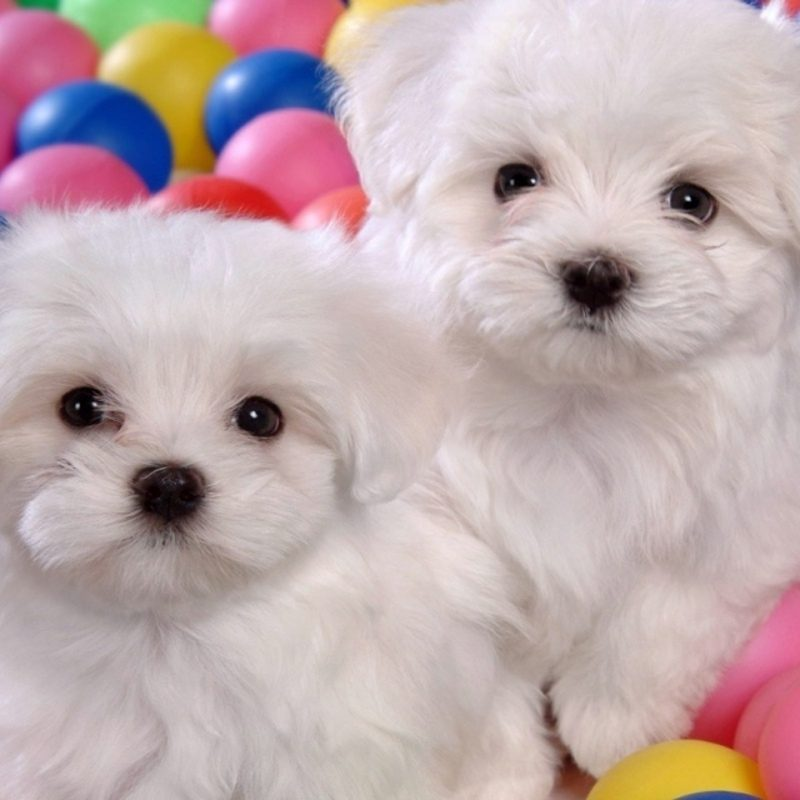 10 Top Dogs And Puppies Wallpaper FULL HD 1920×1080 For PC Background 2018 free download images of cute dogs puppies wallpaper 800x800