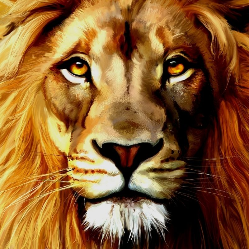 10 Most Popular Images Of Lions Faces FULL HD 1920×1080 For PC Desktop 2018 free download images of lion faces free clipart 800x800