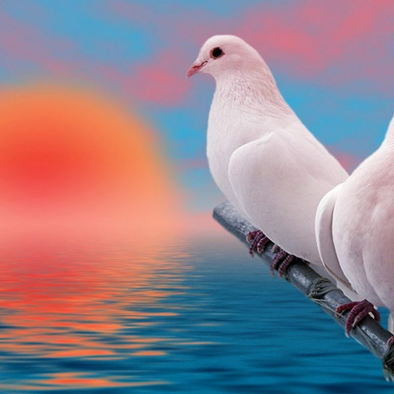 10 New Beautiful Wallpapers Of Love Birds FULL HD 1920×1080 For PC Desktop 2018 free download images of love birds and wallpaper 1 800x800