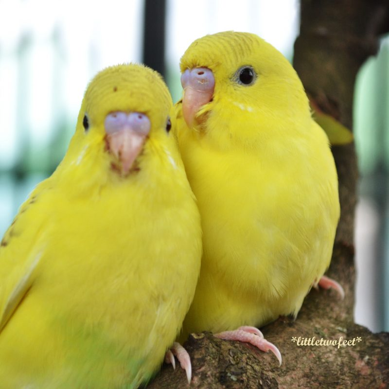 10 New Beautiful Wallpapers Of Love Birds Full Hd 1920 1080 For Pc