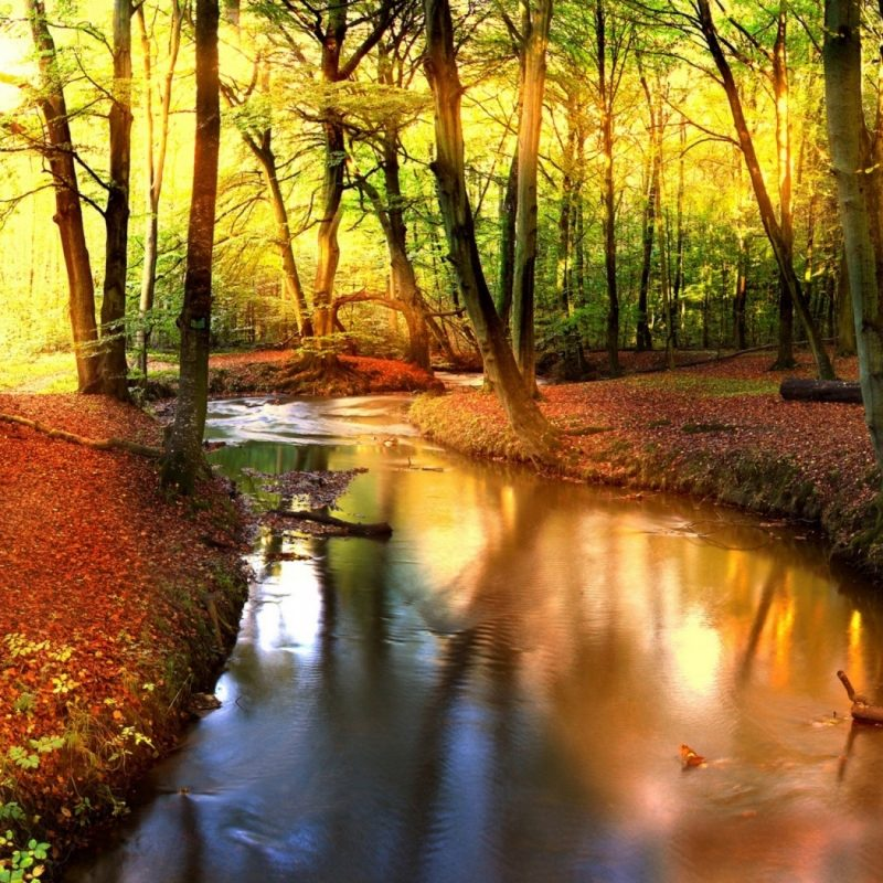 10 New Autumn Landscape Wallpaper Hd FULL HD 1080p For PC Background 2018 free download impressive autumn landscape wallpaper 1680x1050 10 000 fonds d 800x800