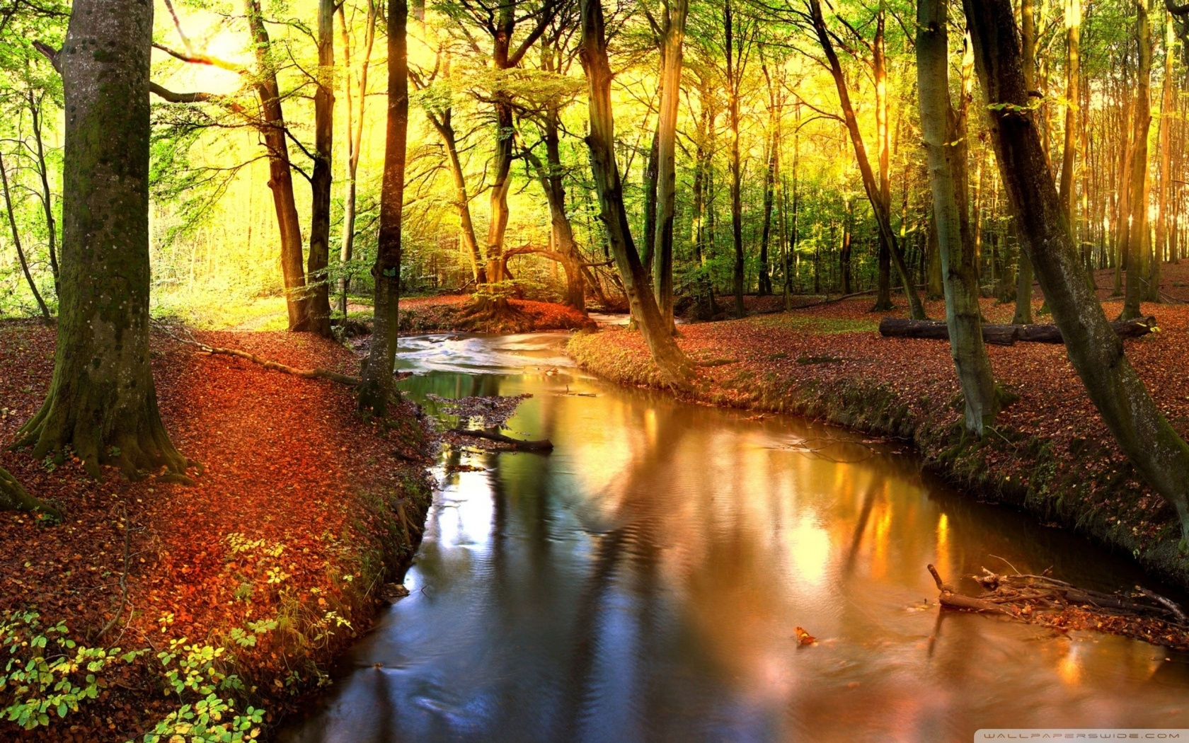 impressive autumn landscape-wallpaper-1680x1050 - 10 000 fonds d