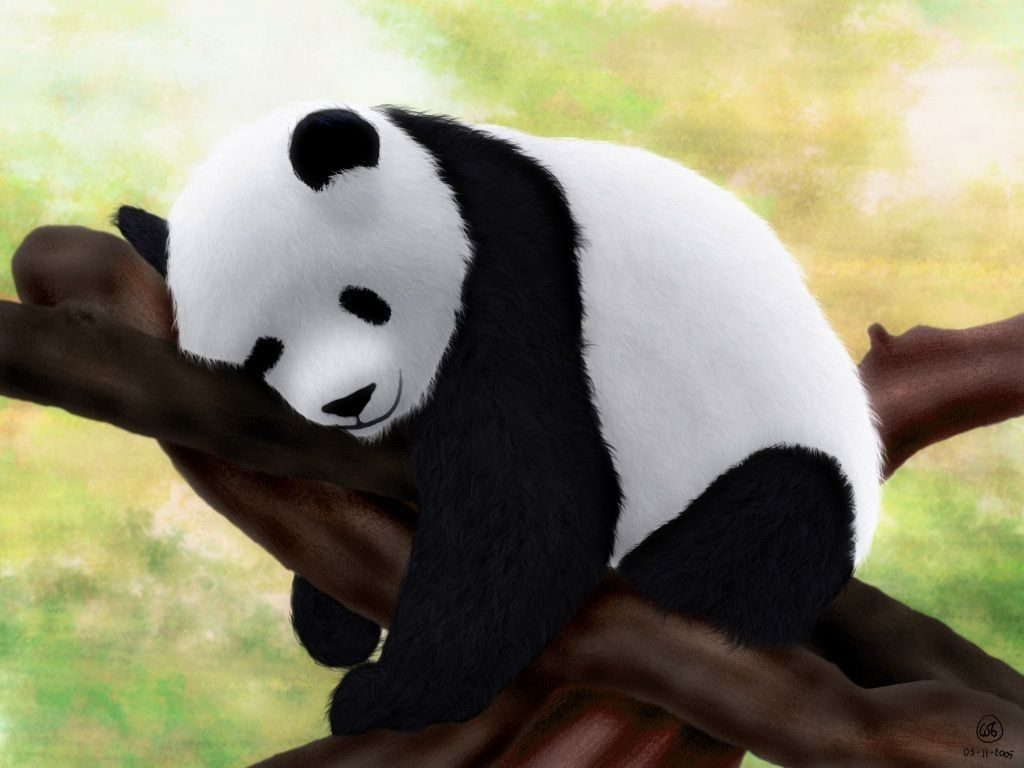 10 Best Cute Baby Panda Images FULL HD 1920×1080 For PC Background 2018 free download index of wp content uploads cute baby panda wallpapers 1024x768