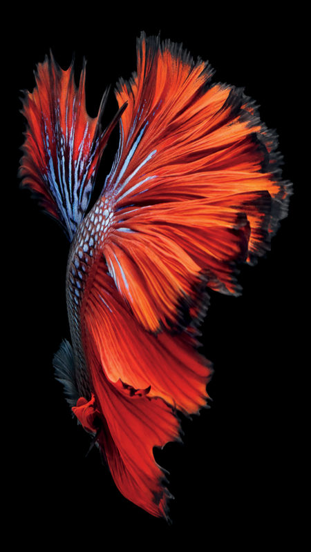 10 New Iphone Fish Wallpaper FULL HD 1920×1080 For PC Background 2021 free download iphone 6s wallpaper download fur altere iphones l weblogit 450x800
