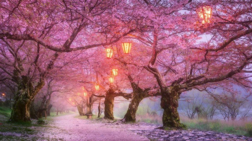 10 Best Cherry Blossom Japan Wallpaper FULL HD 1920×1080 For PC Desktop 2018 free download iwakuni cherry blossom japan wallpaper wallpaper studio 10 1024x576