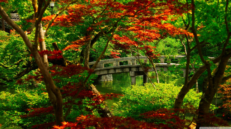 japanese garden (kyoto) ❤ 4k hd desktop wallpaper for 4k ultra hd