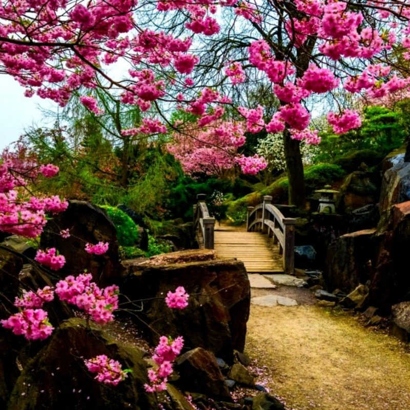 10 Best Japanese Garden Wallpaper 1920X1080 FULL HD 1920×1080 For PC Background 2018 free download japanese garden wallpaper 1920x1080 wallpapers gallery 800x800