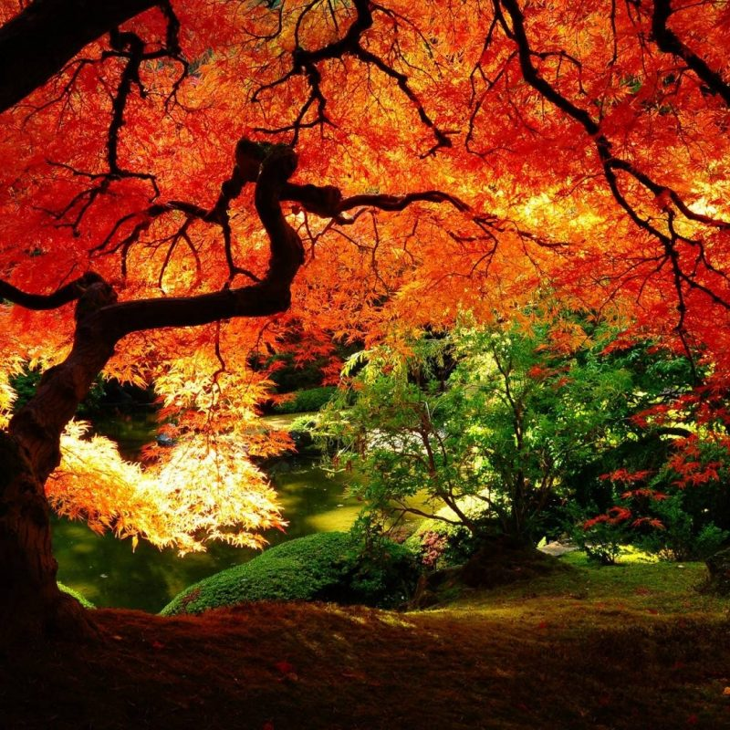 10 New Japanese Garden Wallpaper Night FULL HD 1920x1080 For PC Desktop 2018 Free