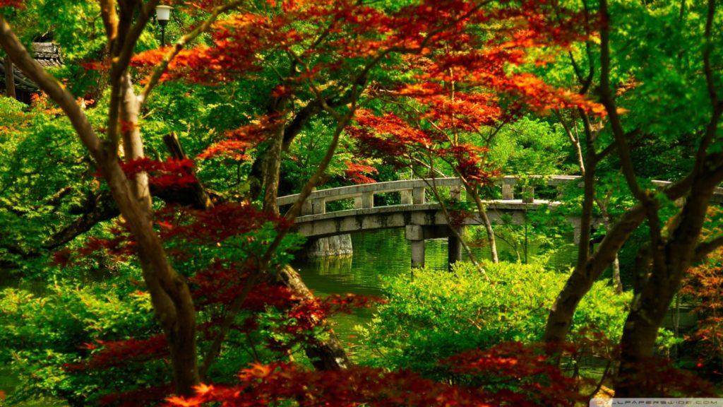 10 Latest Japanese Tea Garden Wallpaper FULL HD 1920×1080 For PC Background 2020 free download japanese tea garden wallpaper 2 1024x576