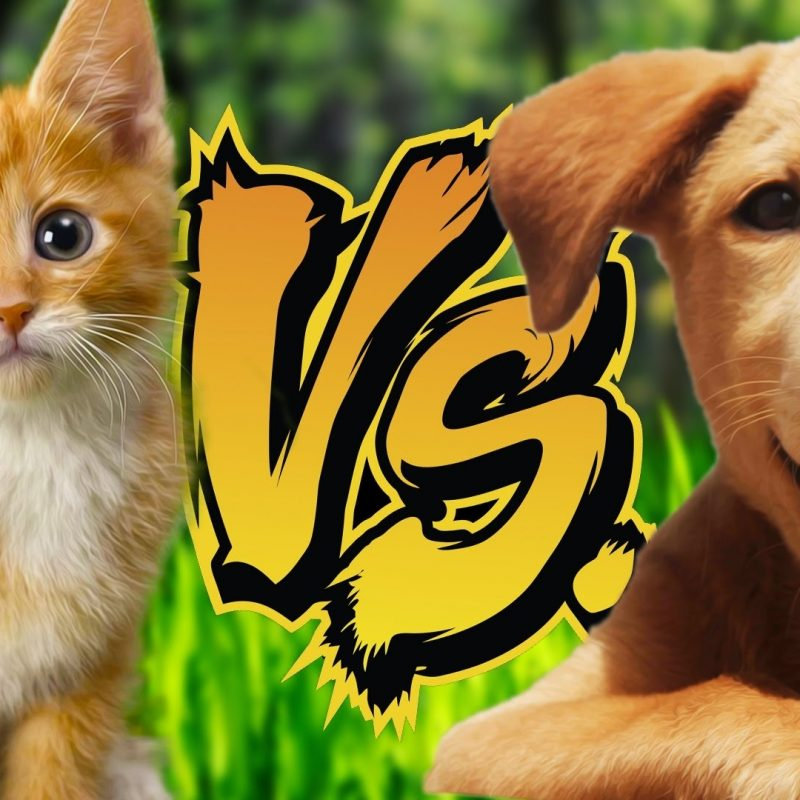 10 New Pics Of Puppys And Kittens FULL HD 1920×1080 For PC Desktop 2018 free download kittens vs puppies reading your comments 70 youtube 800x800