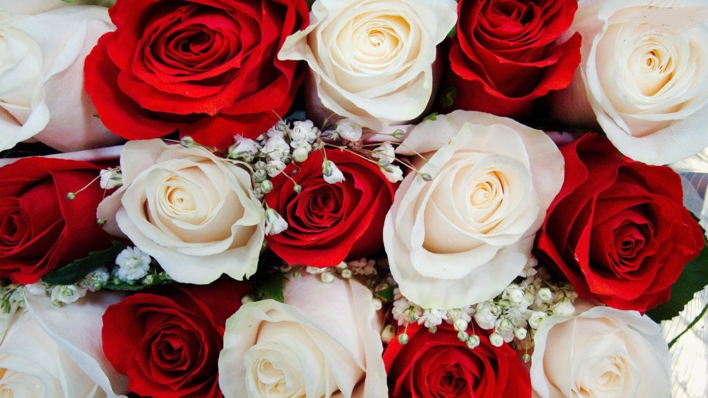 10 New White Roses Background Tumblr FULL HD 1080p For PC Desktop 2020 free download knumathise red and white rose wallpaper images 1024x576