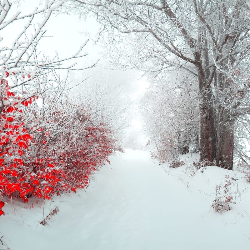 10 Most Popular Beautiful Snow Nature Wallpapers FULL HD 1920×1080 For PC Desktop 2018 free download landscape tree nature beautiful snow winter christmas f wallpaper 800x800