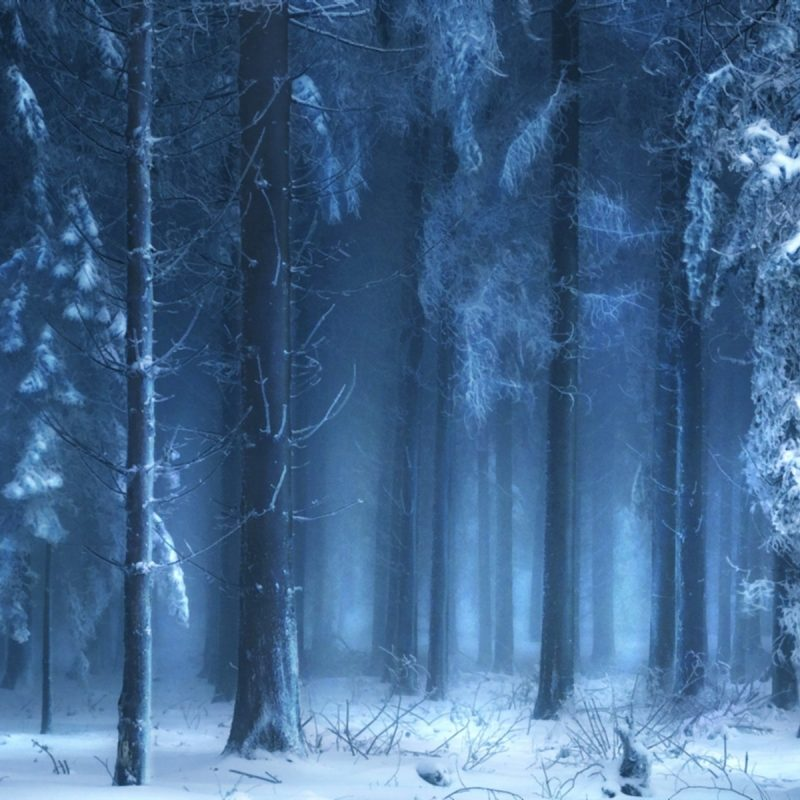 10 Top Dark Snowy Forest Background FULL HD 1920×1080 For PC Desktop 2020 free download landscapes trees forest woods winter snow wallpaper 1920x1200 800x800