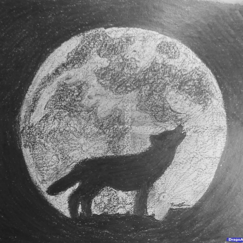 10 Most Popular Drawing Of A Wolf Howling At The Moon FULL HD 1080p For PC Background 2021 free download learn how to draw a wolf howling forest animals animals free step 800x800