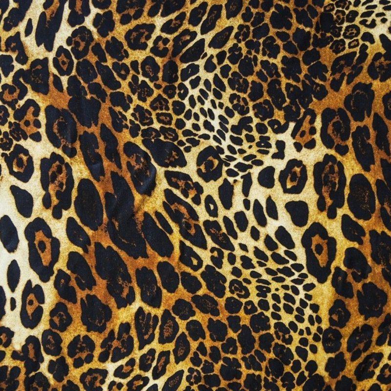10 Top Leopard Print Wallpaper Hd FULL HD 1920×1080 For PC Background 2020 free download leopard print wallpapers hd pixelstalk 800x800