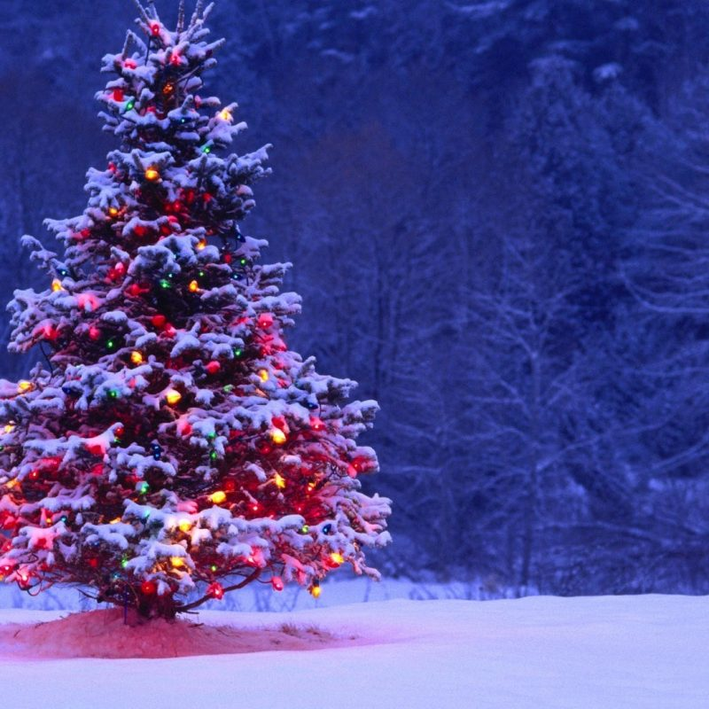 10 Best Christmas Tree Snow Wallpaper Hd FULL HD 1920×1080 For PC Background 2021 free download light covered snowy christmas tree hd wallpapers 1 800x800