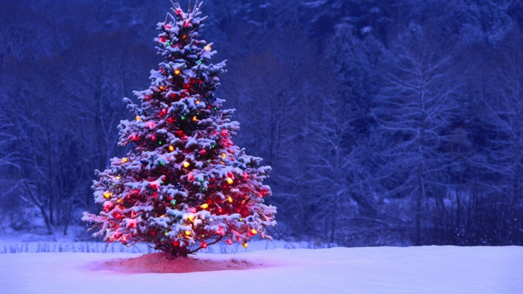 10 New Christmas Tree Wallpaper Hd FULL HD 1920×1080 For PC Background 2020 free download light covered snowy christmas tree hd wallpapers 1024x576