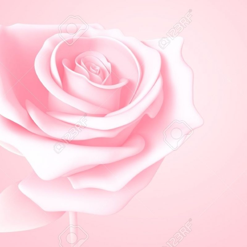10 New Light Pink Rose Background FULL HD 1920×1080 For PC Desktop 2018 free download light pink rose pastel colors isolated model 3d on background stock 800x800