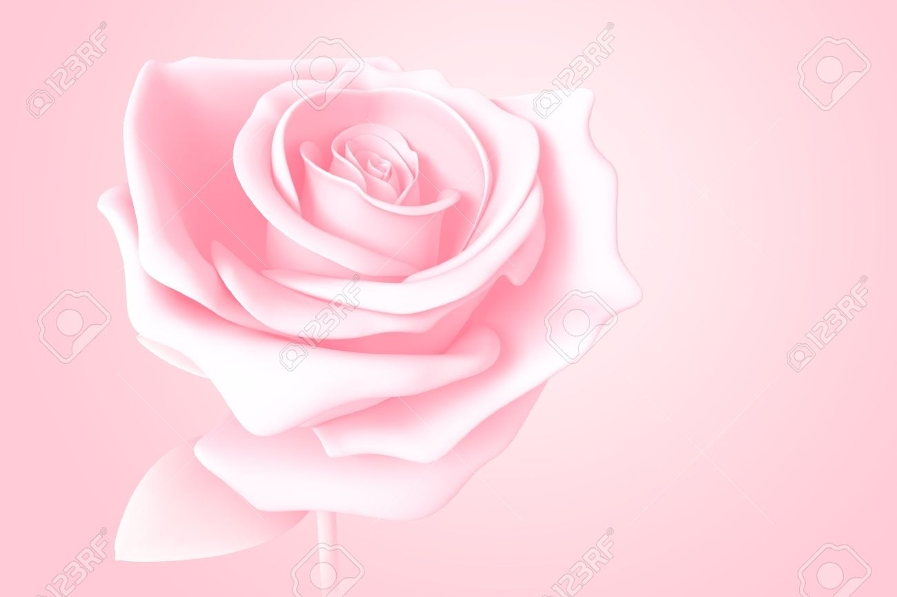 light pink rose pastel colors isolated model 3d on background stock