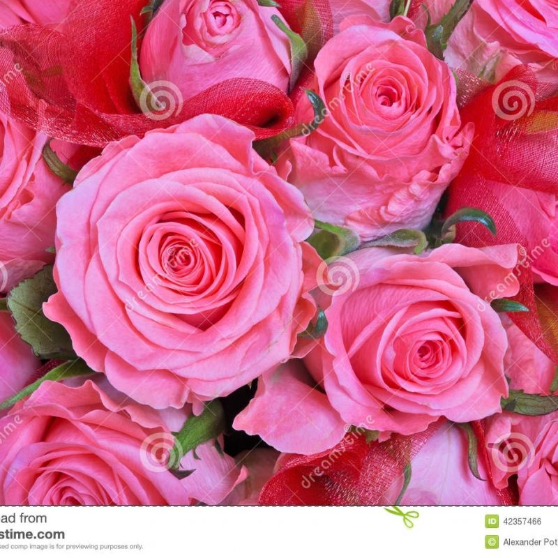 10 New Light Pink Rose Background FULL HD 1920×1080 For PC Desktop 2018 free download light pink roses background stock photo image of blossom petal 800x800