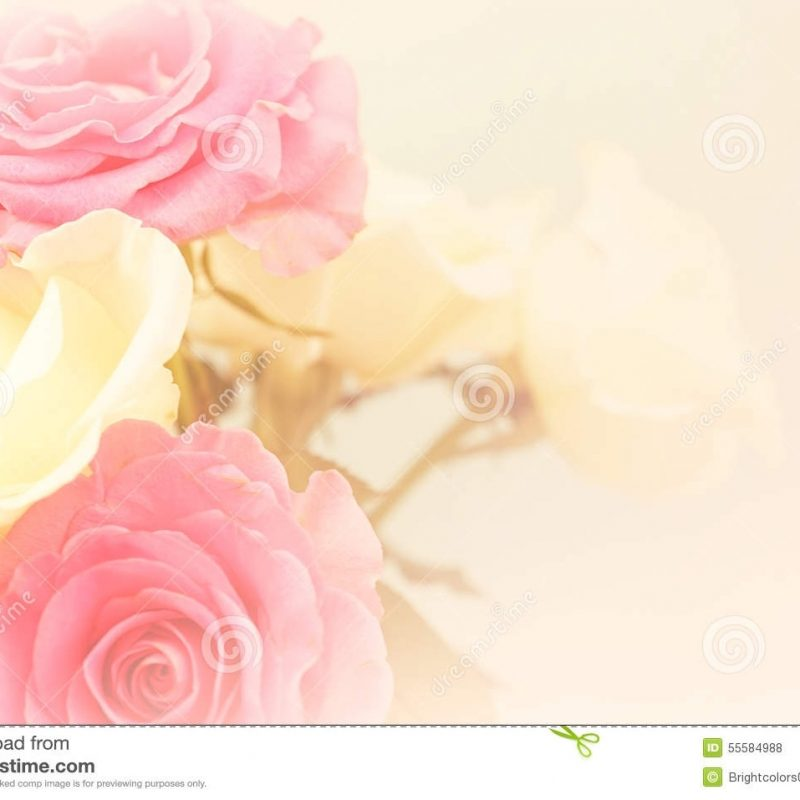 10 New Light Pink Rose Background FULL HD 1920×1080 For PC Desktop 2018 free download light pink roses in soft color and blur style stock photo image of 800x800