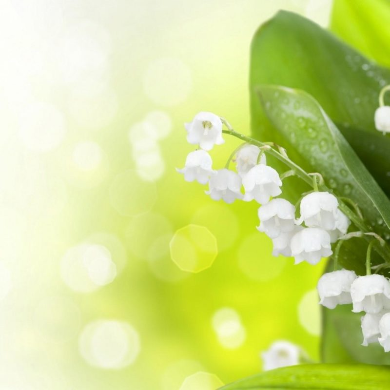 10 Most Popular Lily Of The Valley Wallpaper FULL HD 1920×1080 For PC Background 2018 free download lily of the valley wallpaper wallpaper studio 10 tens of 800x800