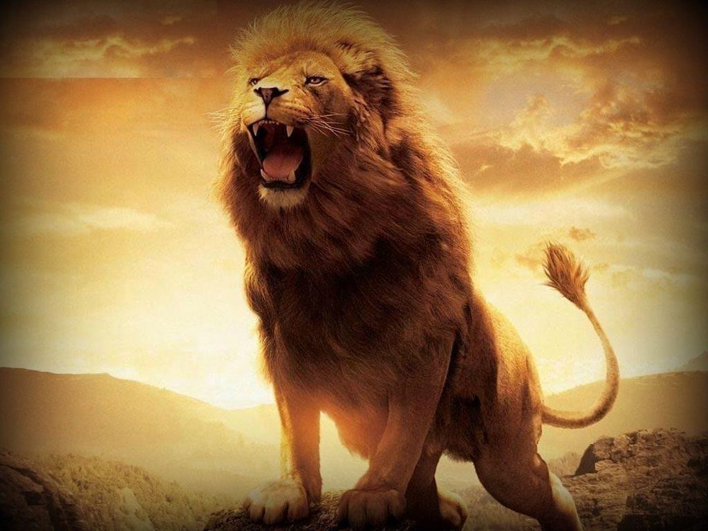 10 Most Popular Hd Lion Wallpapers 1080P FULL HD 1920×1080 For PC Desktop 2018 free download lion lion latest images for desktop 1080p wide hd download 1024x768