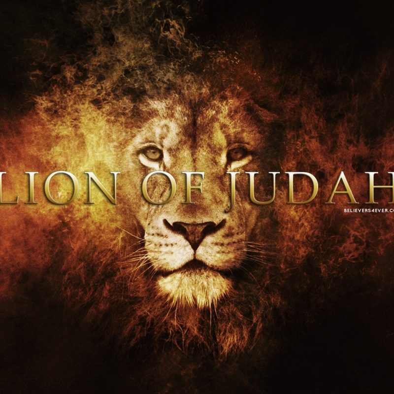 10 Latest Lion Of Judah Images FULL HD 1080p For PC Background 2020 free download lion of judah believers4ever 1 800x800