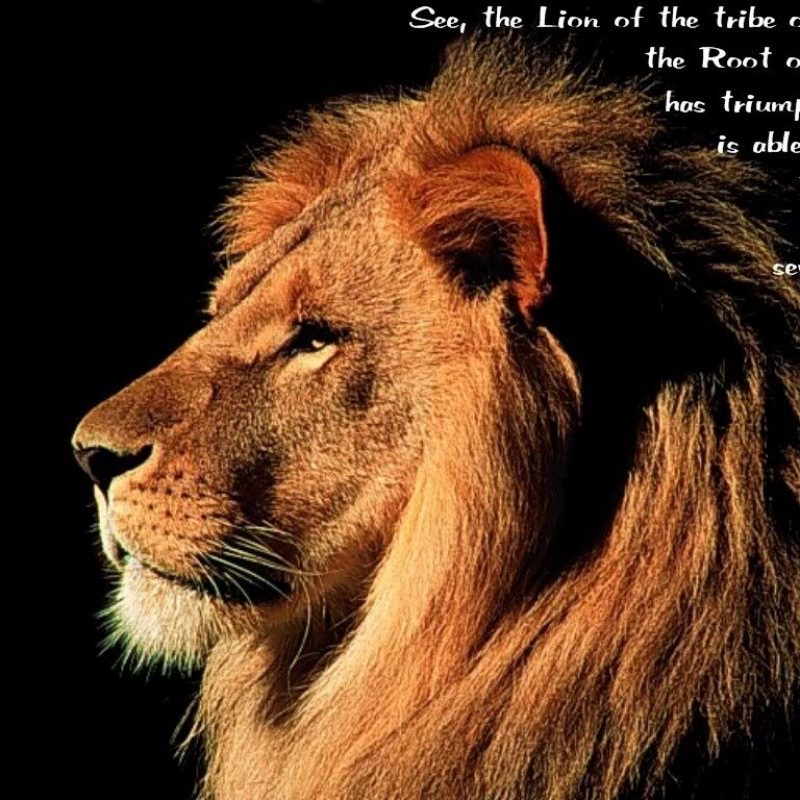 10 Latest Lion Of Judah Images FULL HD 1080p For PC Background 2020 free download lion of judah gospel e280a2 800x800