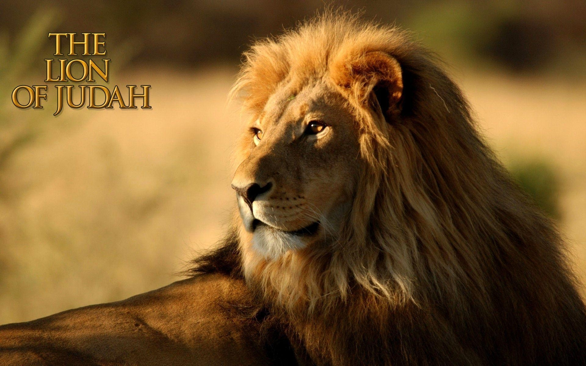 10 Latest Lion Of Judah Images FULL HD 1080p For PC Background