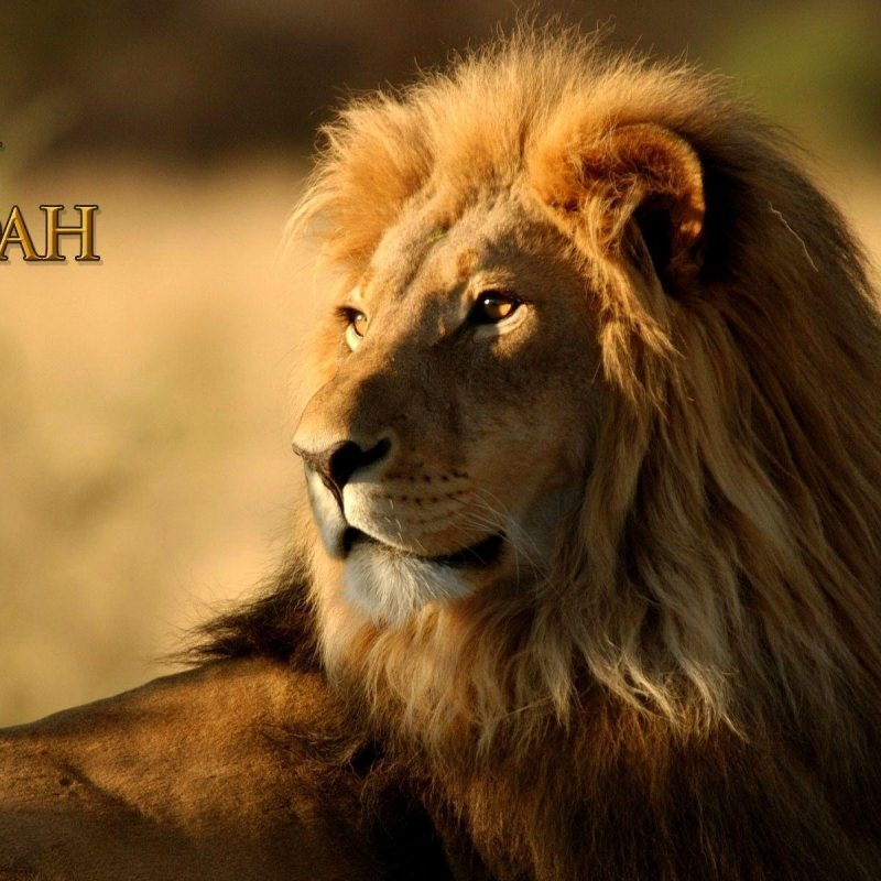 10 Best Lion Of Judah Pics FULL HD 1920×1080 For PC Desktop 2018 free download lion of judah wallpapers wallpaper cave 800x800