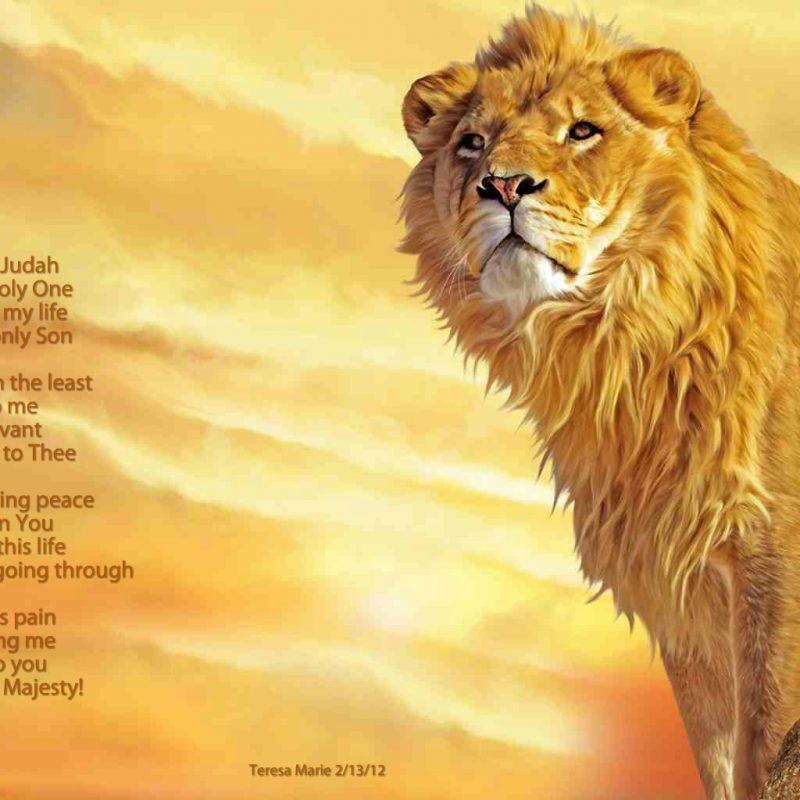 10 Best Lion Of Judah Pics FULL HD 1920×1080 For PC Desktop 2018 free download lion of judah what about god 800x800