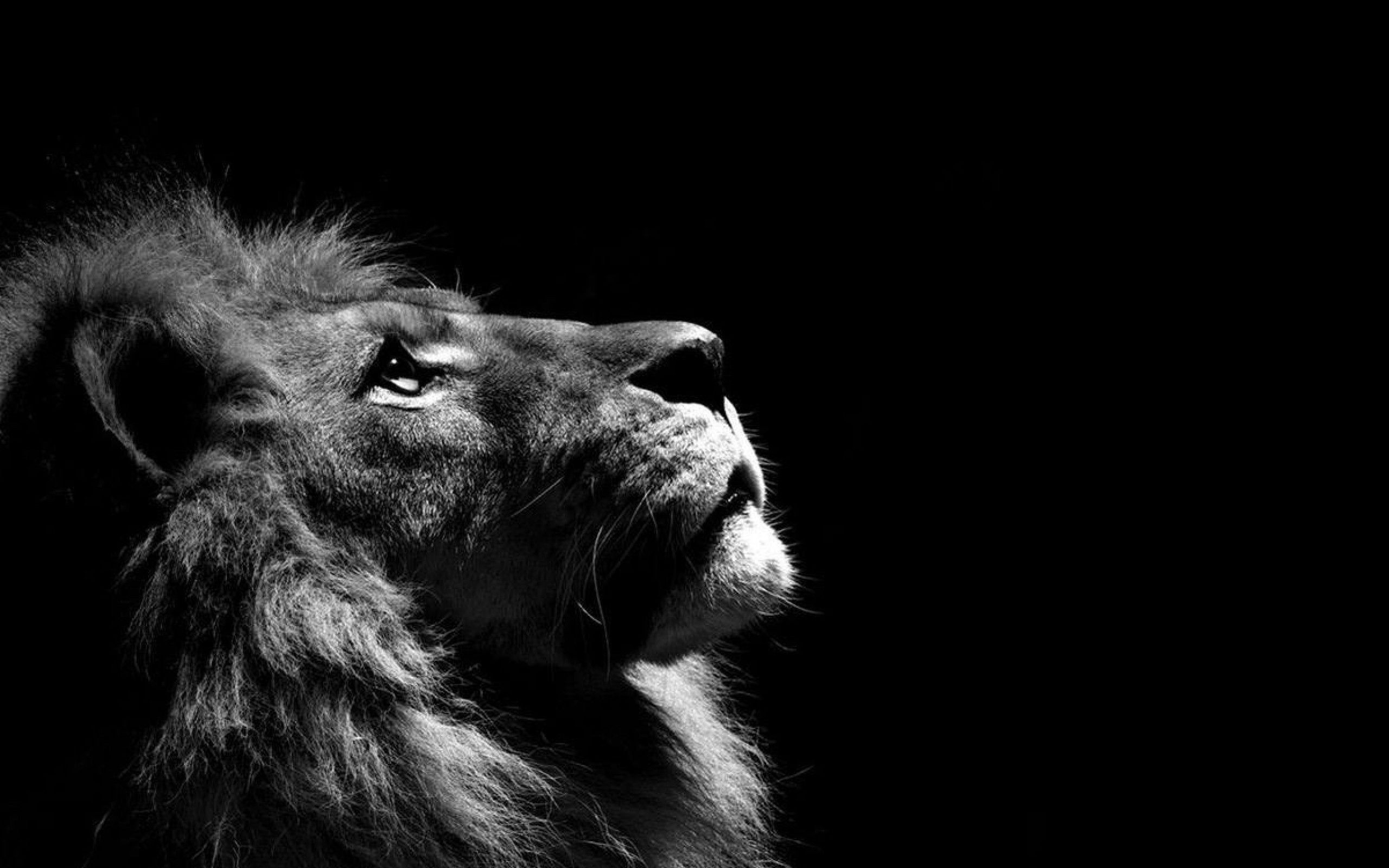 10 most popular hd lion wallpapers 1080p full hd 1920×1080 for pc
