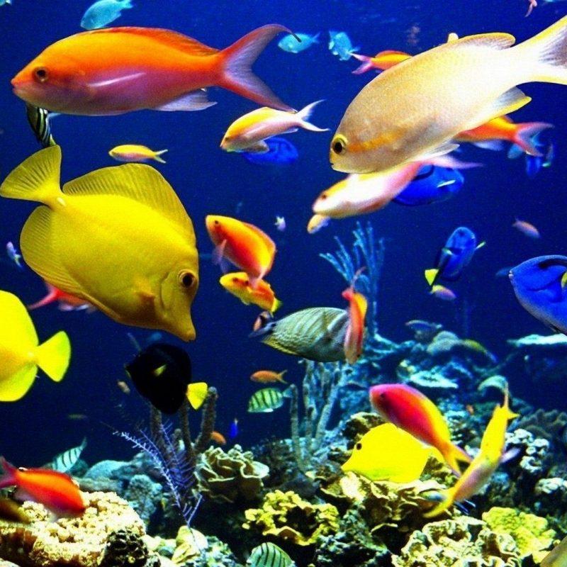 10 Top Tropical Fish Wallpaper Hd FULL HD 1920×1080 For PC Desktop 2018 free download lord ganesha wallpapers wallpapers for desktop pinterest fish 800x800