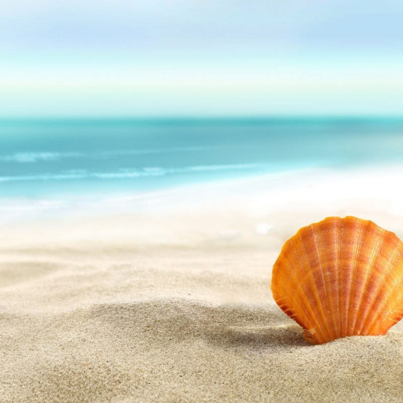 10 New Sea Shell Wall Paper FULL HD 1080p For PC Background 2018 free download lost seashell 4k wallpaper free 4k wallpaper 800x800