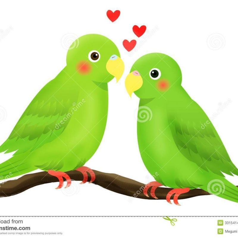 10 Latest Images Of Love Bird FULL HD 1080p For PC Background 2018 free download love bird stock vector illustration of heart branch 3315414 800x800