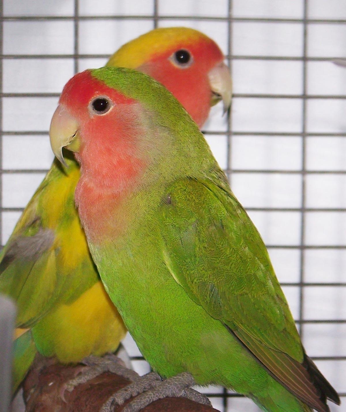 lovebird - the oasis sanctuary