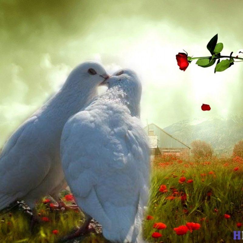 10 New Beautiful Wallpapers Of Love Birds FULL HD 1920×1080 For PC Desktop 2020 free download lovebirds wallpapers wallpaper 1024x768 love birds wallpaper 57 800x800