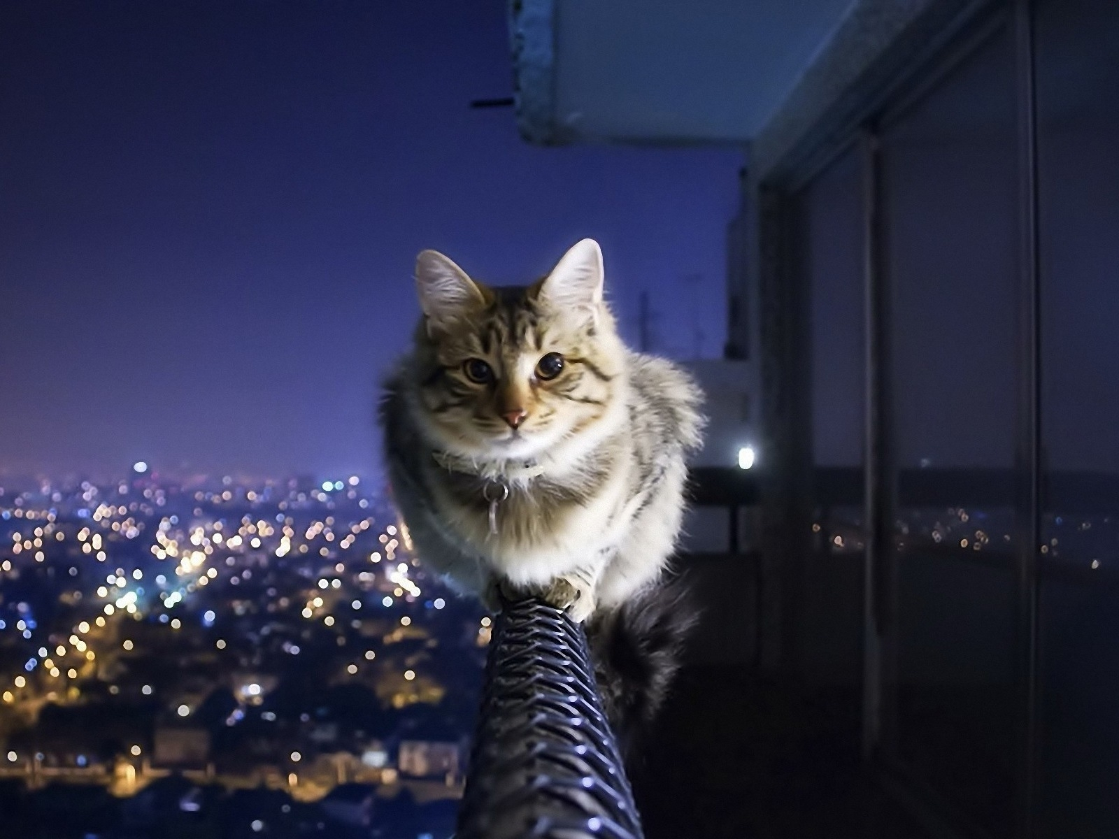 lovely cat wallpapers, best lovely cat wallpapers in high quality