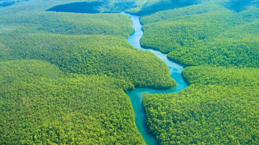 10 New Pics Of The Amazon Rainforest FULL HD 1920×1080 For PC Desktop 2020 free download %name