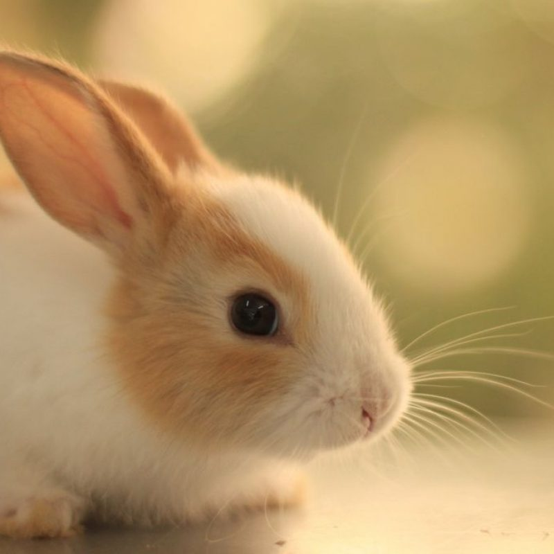 10 Most Popular Cute Baby Bunny Pictures FULL HD 1920×1080 For PC Desktop 2018 free download mad dont count numbers just look at a bunny 800x800