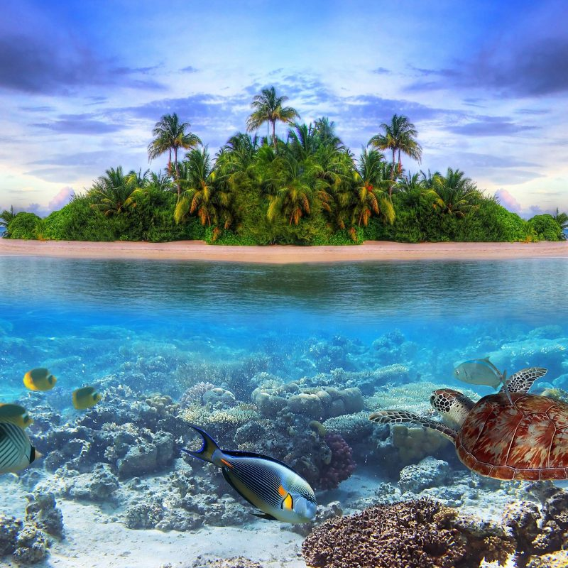 10 Best Tropical Island Wallpaper With Fish FULL HD 1920×1080 For PC Background 2018 free download marine life on a tropical island in the maldives ocean sea fish 800x800